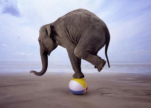 Se bara till att balansera den där elefanten.